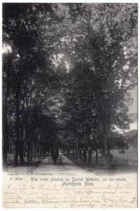 Marshfield, Mass, Elm Trees planted by Daniel Webster, on his estate