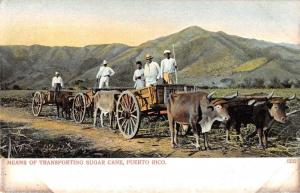 Puerto Rico Transporting Sugar Cane Ox Carts Antique Postcard J74337