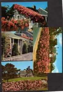 MA Lot 4 CAPE COD Houses Massachusetts Mass Postcards