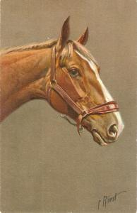 Horse Nice antique Swiss postcard. Artist signed