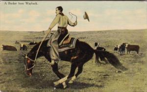 Cowboy Riding Horse A Bucker From Way Back Curteich