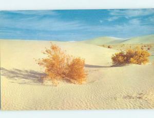 Pre-1980 DUNES SCENE White Sands - Near Alamogordo & Las Cruces NM G5775