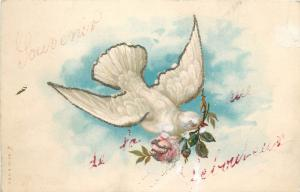 White dove with rose flower vintage chromo fantasy greetings postcard