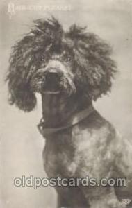 Dog 1910 light corner wear, postal used 1910