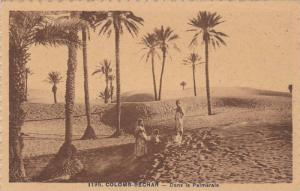 COLOMB-BECHAR - Dans la Palmerale , Algeria , 00-10s