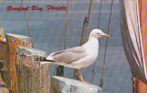 Florida Birds Sea Gull At Barefoot Bay