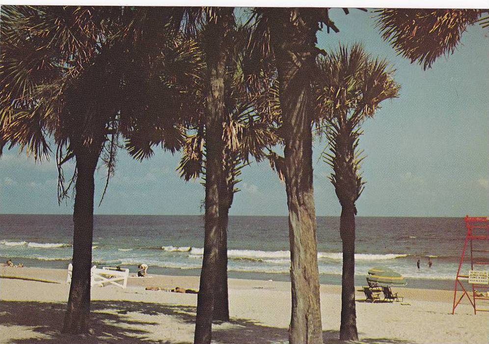 Palm Trees On The Beach Greetings From
