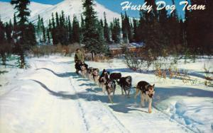 Alaska Husky Dog Team, ANCHORAGE, Alaska, 40-60´