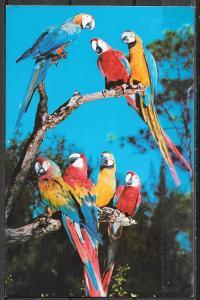 Florida, Miami, Parrot Jungle, unused