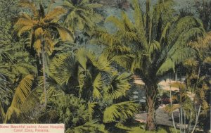 PANAMA Canal Zone, 1900-10s; Some Beautiful Palms, Ancon Hospital