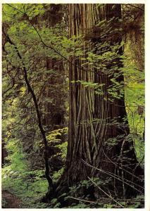 Pacific Northwest Forests - Washington