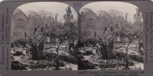 SV: 1910s ; Garden of Gethsemane & New Church , JERUSALEM , Palestine