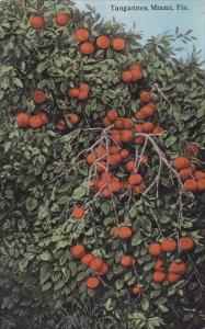 Florida Miami Tangarines 1919