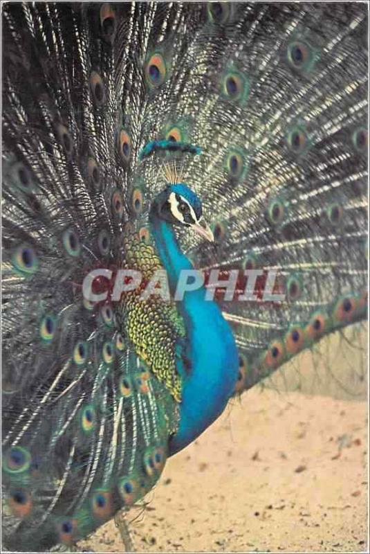 Modern Postcard Mauritius blue Peacock of the Indies