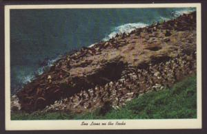 Sea Lions on the Rocks Postcard
