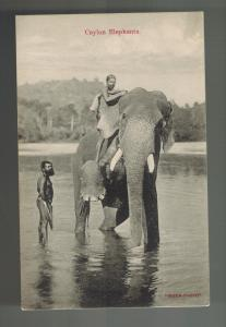 Mint Ceylon RPPC Real Picture Postcard Elephant in river with Rider