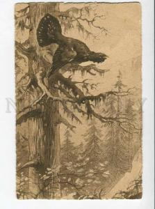 270043 Russia HUNT capercaillie Vintage ENGRAVING postcard