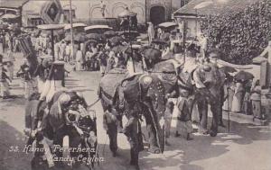 Ceylon Sri Lanka Temple Elephants Kandy Perahara