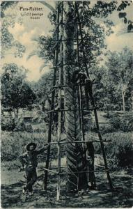 CPA PARA-RUBBER 23 jaarige boom. INDONESIA (a3019)