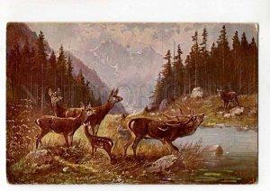 288453 Mueller MULLER Hunt DEER near River Vintage #110 PC