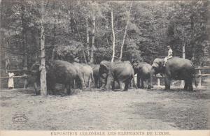 Exposition Coloniale Les Elephants de L'Inde Hagenbeck Circus and Zoo