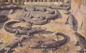 Florida An Alligator Farm