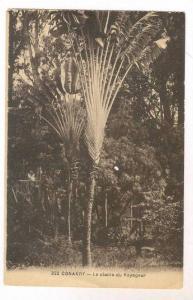 CONAKRY, Africa, 00-10s La Plante du Voyageur