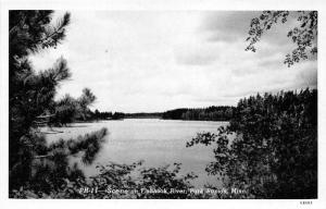 Park Rapids Minnesota~Fishhook River Sccene~Pine Tree in Foreground~1946 Pc