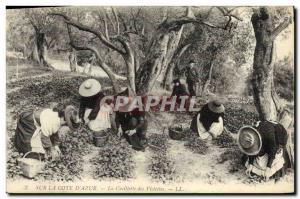 Old Postcard Cote d & # 39Azur Picking Violets