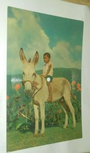 CECIL LLOYD ROY SHURLAND BOY ON DONKEY RECORD POSTCARD AFRO CUBAN 1960 Bahamas