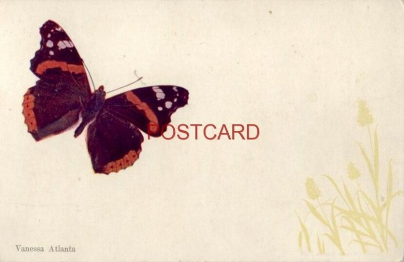 VANESSA ATLANTA - butterfly
