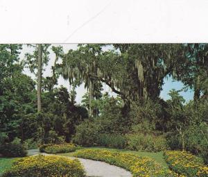 Scenic View,  Orton Plantation, near Wilmington,  North Carolina,  40-60s