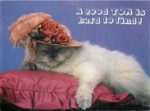 A good Tom is hard to find cat hat postcard