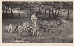 RP: CATSKILL Game Farm , 1910-30s , New York ; Feeding Deer