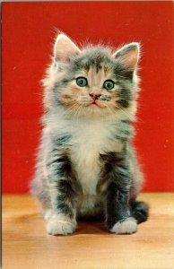 Postcard Post Cat Kitten Kitty Lonesome Whiskers - chrome - vintage