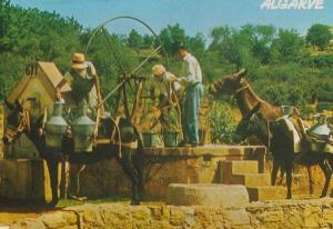 Algarve Portugal Donkey Weighing Machine Loading Water Bucket Buckets Postcard