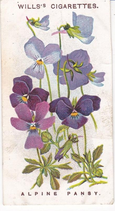 Cigarette Cards Wills Alpine Flowers No 39 Alpine Pansy
