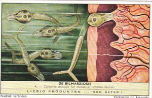 Liebig Trade Card s1751 Bilharziosis Parasite Disease No 4 Cercaria dringen h...