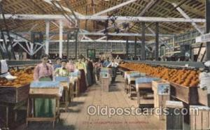 Orange Farming, Farm, Farmer, Postcard Postcards Packing in California Orange