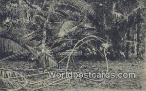 Malaysia, Malaya Malay Peninsula Rattan