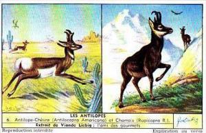 Liebig Trade Card S1559 Antelopes No 6 Chevre