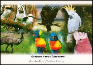 Australia Post card - Native Birds, unused
