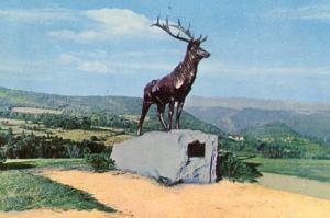 MA - Mohawk Trail, The Elk at Whitcomb Summit
