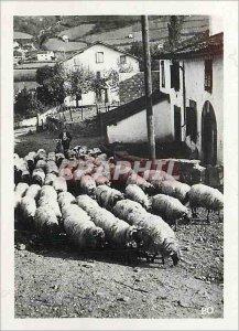 Modern Postcard Hautes Pyrenees Sheep