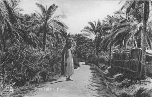 br104180 date palms  basra real photo iraq