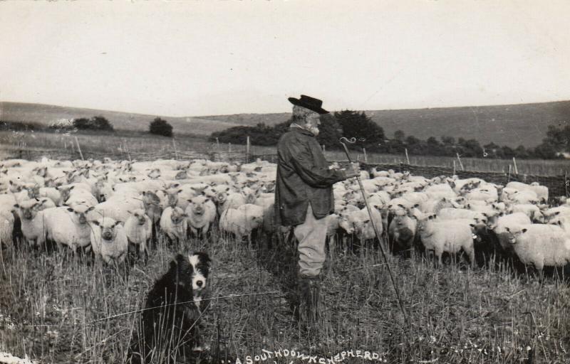 RP: A Southdowns Shepherd, Dog & Flock , UK , 00-10s