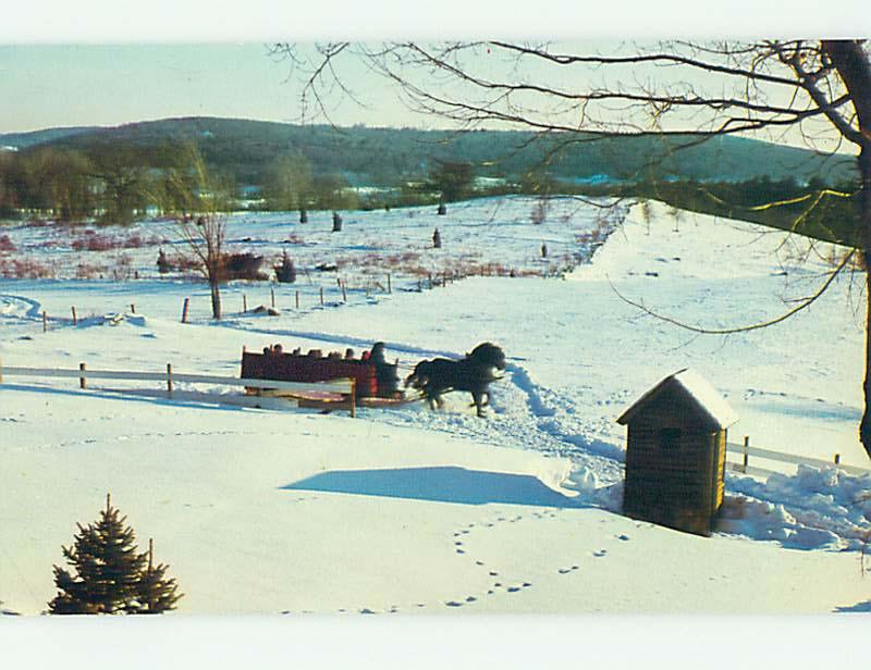 1982 Horse AND SLEIGH AT SALEM CROFS INN Olde Brookfield Massachusetts MA L1494