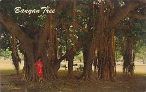 Hawaii Honolulu Banyan Tree