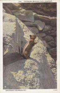 Colorado Denver Chipmunk Begging For A Handout Universal Colorado Pet