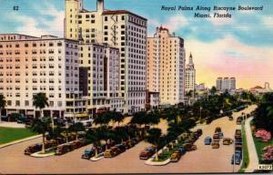 Florida Miami Royal Palms Along BIscayne Boulevard